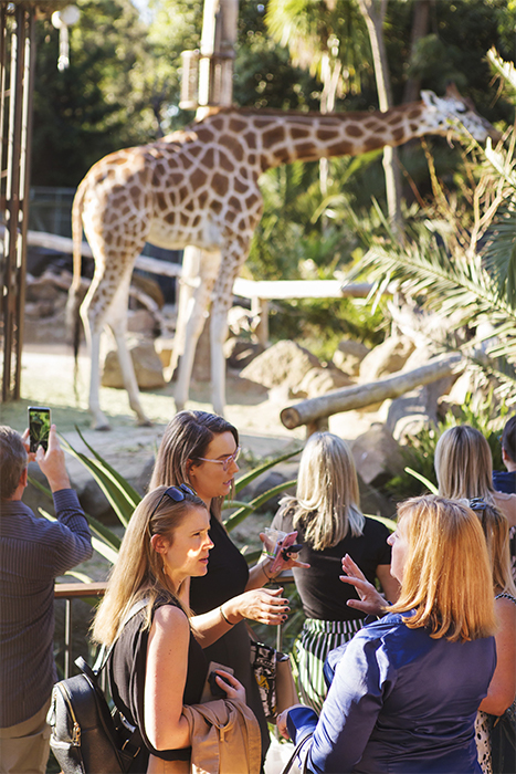 Corporate Event at Giraffes